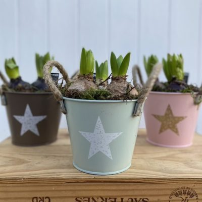 Hyacinth Star Bucket