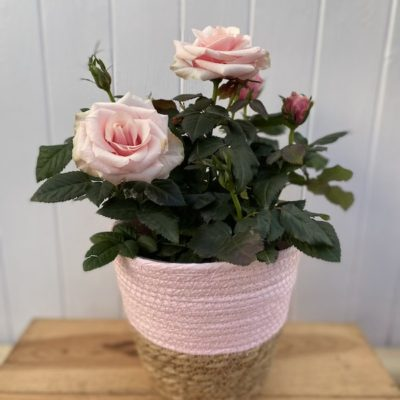 Rose Basket